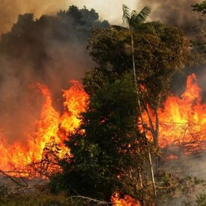 Amazon, the Biggest Rainforest is Burning at a Huge Pace: Signaling Danger